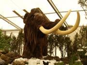 Nachbildung eines Mammut