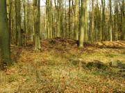 Hügelgrab der Bronzezeit